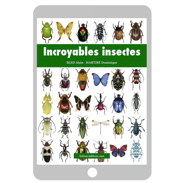 Couverture ebook Incroyables insectes
